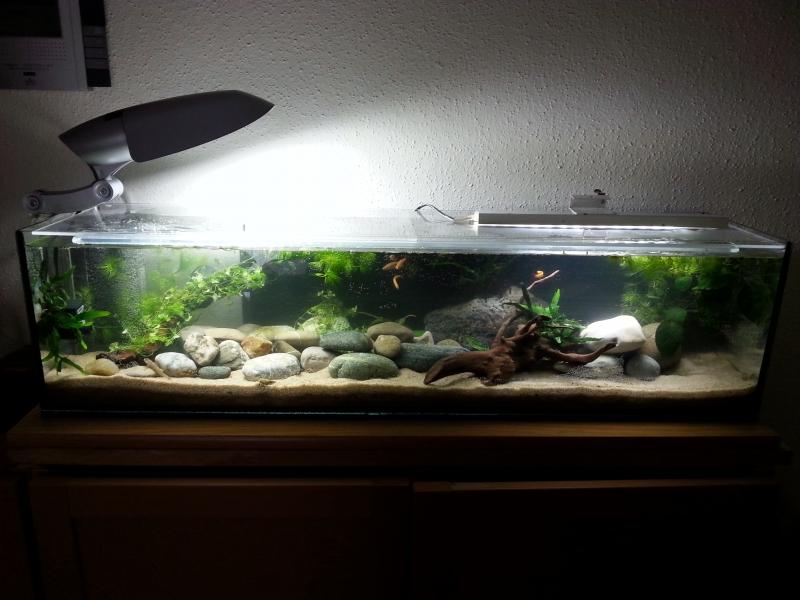 kundenbilder pepe aquaristik. Black Bedroom Furniture Sets. Home Design Ideas